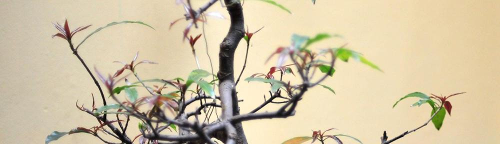Adorabile Bigiotteria